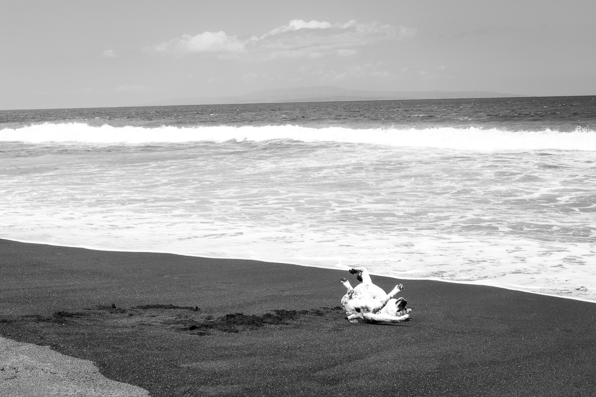 Dog On Black Sand, August 2017